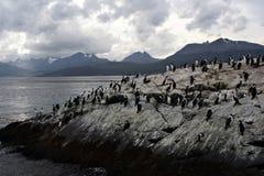 Pinguini di Malvinas Fotografia Stock Libera da Diritti