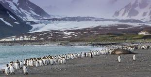 Pinguini di re che camminano a partire dai venti catabatici sulla baia di St Andrews, Georgia del Sud Fotografia Stock Libera da Diritti