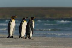 Pinguini di re che stanno su una costa sabbiosa dall'oceano blu Fotografie Stock