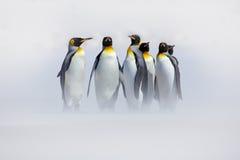 Pinguini nella neve Gruppo di pinguini di re che vengono alla spiaggia del mare con l'onda un cielo blu Uccelli sulla spiaggia Im Fotografia Stock Libera da Diritti