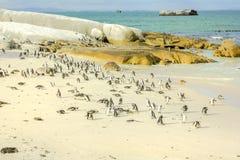Pinguini in spiaggia di Boulder fotografie stock libere da diritti