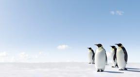 Pinguini su ghiaccio Fotografia Stock Libera da Diritti