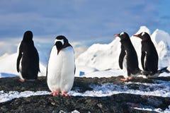 Pinguini su una roccia in Antartide Fotografia Stock