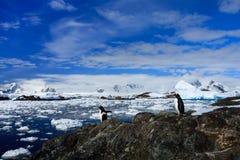Pinguini sulla costa di pietra Fotografia Stock