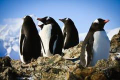 Pinguini sulla roccia Fotografia Stock Libera da Diritti