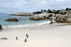Pinguini sulla spiaggia Fotografie Stock Libere da Diritti