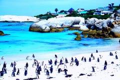 Pinguinkolonie stockfoto