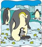 Pinguino Fotografie Stock