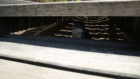 Pinguino all'isola del pinguino video d archivio
