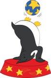 Pinguino del circo Immagini Stock