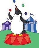 Pinguino del circo Fotografia Stock Libera da Diritti