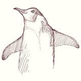 Pinguino dell'annata dell'incisione Illustrazione Vettoriale