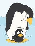 Pinguino della madre che guarda il suo bambino Fotografia Stock
