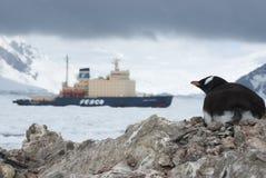 Pinguino di Gentoo che esamina rompighiaccio. Fotografia Stock Libera da Diritti