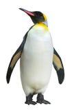 Pinguino di imperatore immagine stock libera da diritti
