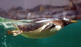 Pinguino di nuoto Immagine Stock