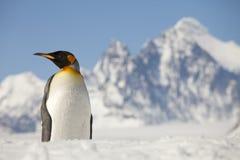 Pinguino di re davanti ai picchi di Georgia Island del sud Immagine Stock Libera da Diritti