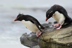 Pinguino di Rockhopper, eudyptes chrysocome, saltante nel mare, acqua con le onde, uccelli nell'habitat della natura della roccia fotografia stock libera da diritti