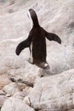 Pinguino di salto fotografia stock libera da diritti