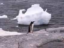 Pinguino e blocco di ghiaccio Immagini Stock