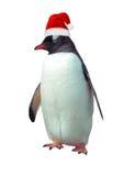 Pinguino isolato di gentoo Immagini Stock