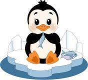 Pinguino sulla banchisa galleggiante di ghiaccio Fotografia Stock Libera da Diritti