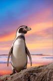 Pinguino sveglio Fotografia Stock Libera da Diritti