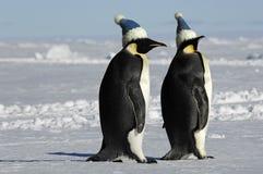 Pinguinpaare mit Schutzkappen Stockbild