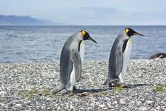 2 pinguins короля приближают к морю Стоковое фото RF