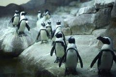 北极Pinguins 图库摄影