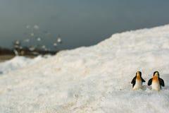 Pinguins. fotografia de stock royalty free