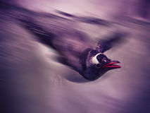 pinguins fotos de stock royalty free