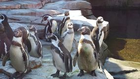Pinguins Stockbild