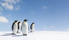 Pinguins Foto de Stock