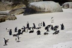 Pinguins africanos, cabo peninsular, África do Sul imagens de stock