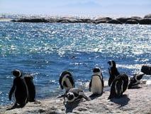 Pinguins africanos em rochas pelo mar Fotografia de Stock Royalty Free