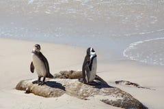 Pinguins africanos em uma rocha fotografia de stock