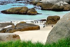 Pinguins africanos na praia dos pedregulhos foto de stock royalty free