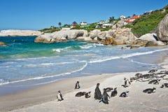 Pinguins africanos, pedregulhos parque, África do Sul imagens de stock