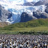 Pinguins antárticos Imagens de Stock