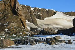Pinguins in Antsrctic. Colony pinguins in Antarctic Stock Image