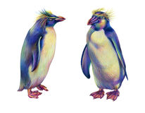Pinguins coloridos do rockhopper do arco-íris do desenho de lápis ilustração do vetor