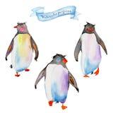 Pinguins da aquarela Imagem de Stock Royalty Free