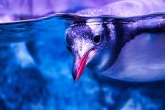Pinguins da vida marinha em Banguecoque foto de stock
