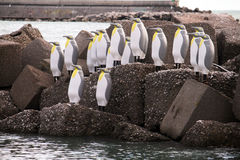 Pinguins dans le salerno Images libres de droits