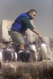 Pinguins de alimentação fotos de stock