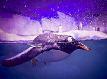 Pinguins de Gentoo fotos de stock