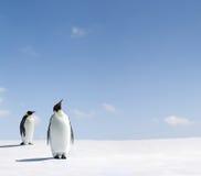 Pinguins de imperador imagens de stock royalty free