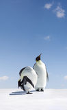 Pinguins de imperador fotos de stock