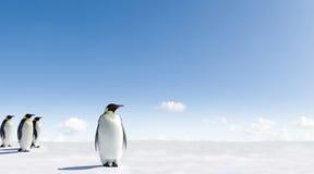 Pinguins de imperador em Continente antárctico fotos de stock royalty free